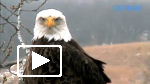 Image for Decorah Eagles Webcam